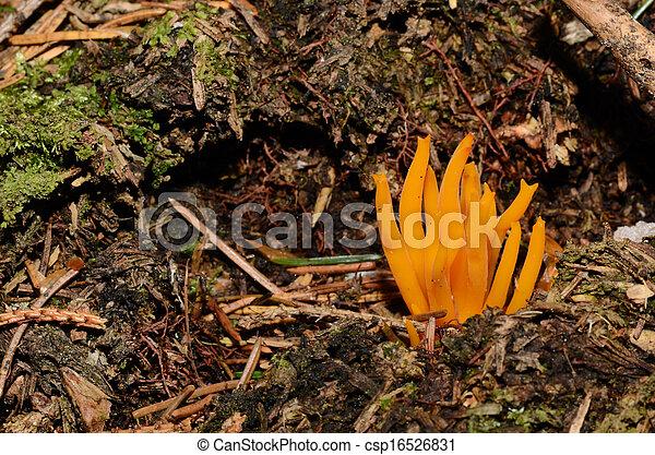 photo orange corail champignon for t image images photo libre de droits photos sous. Black Bedroom Furniture Sets. Home Design Ideas