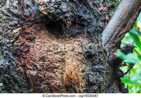 bilder von fliegendes eichh rnchen nest baum stamm loch doi csp16536487 suchen sie. Black Bedroom Furniture Sets. Home Design Ideas