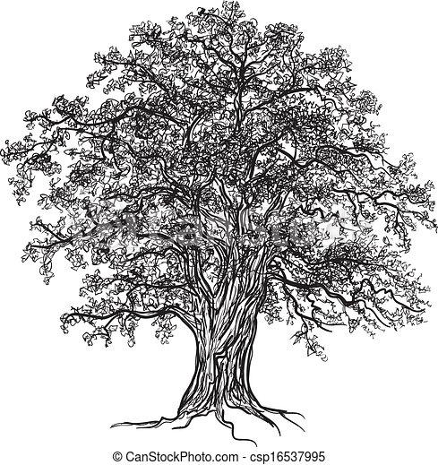 Acorn Tree Drawing Oak Tree Csp16537995