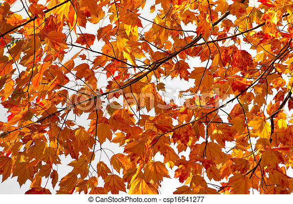 Colorful Fall Leaves Background Texture - csp16541277