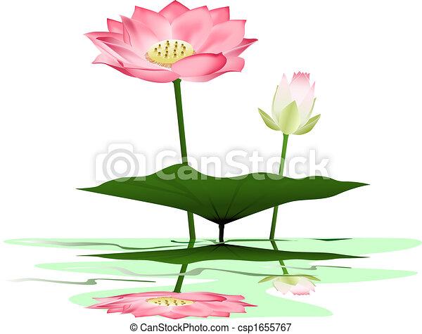 Lotus - csp1655767