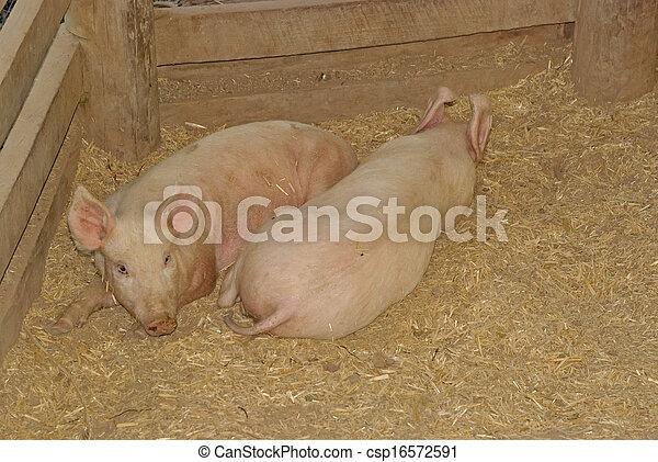 mammal - csp16572591