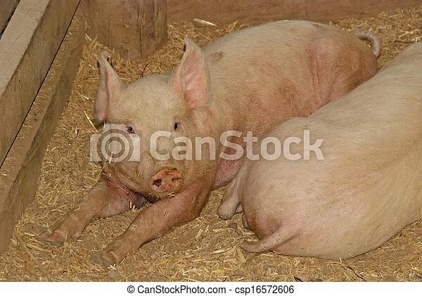 mammal - csp16572606