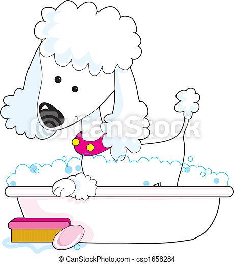 Poodle Bath - csp1658284