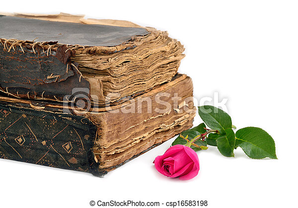 roses next to the historic books isolated - csp16583198
