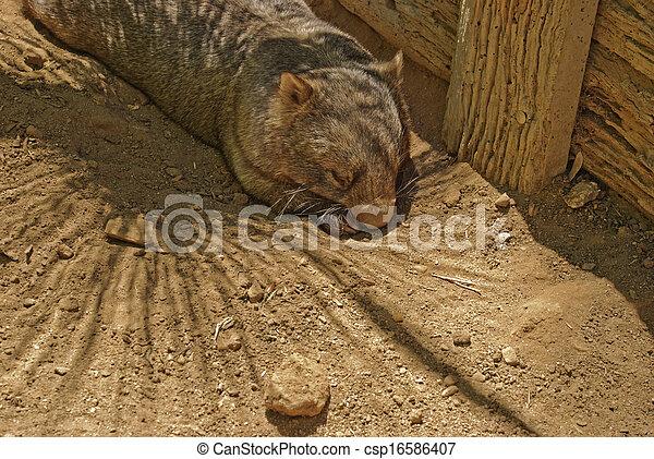 mammal - csp16586407