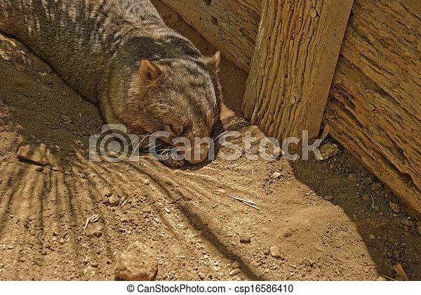 mammal - csp16586410
