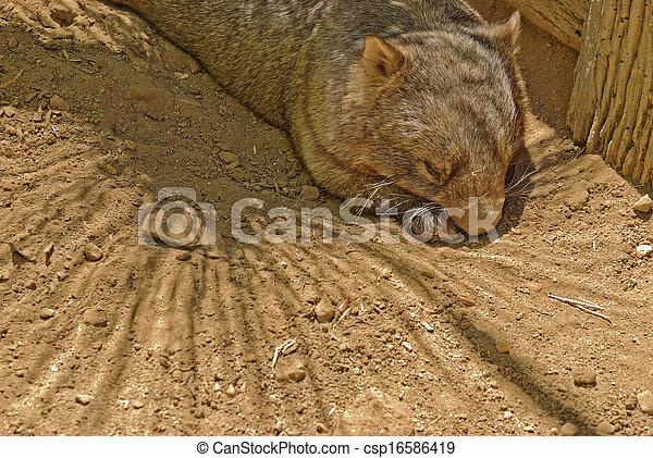 mammal - csp16586419