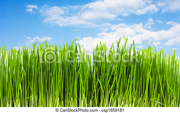 grass on a background of blue sky, summer - csp1659181