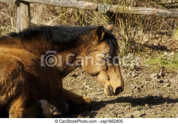 pony - csp1662405