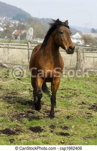 Pferd - csp1662406