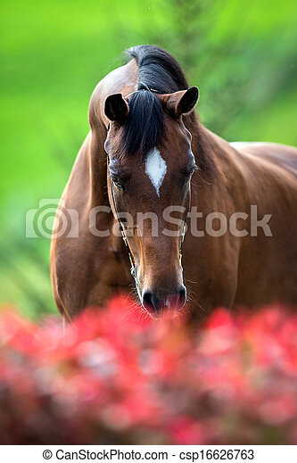 Horse smelling flowers - csp16626763