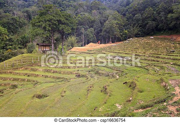Rural scene deep inside Borneo - csp16636754
