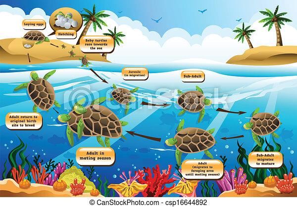 vida, ciclo, mar, tortuga - stock de ilustracion, ilustracion libre de ...