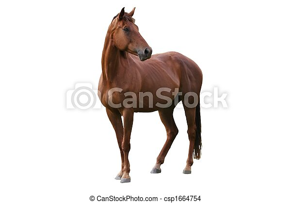 Brown Horse Isolated - csp1664754