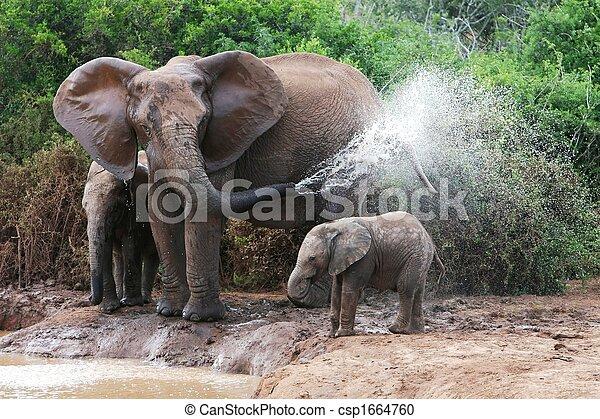 Elephant Spraying Water - csp1664760