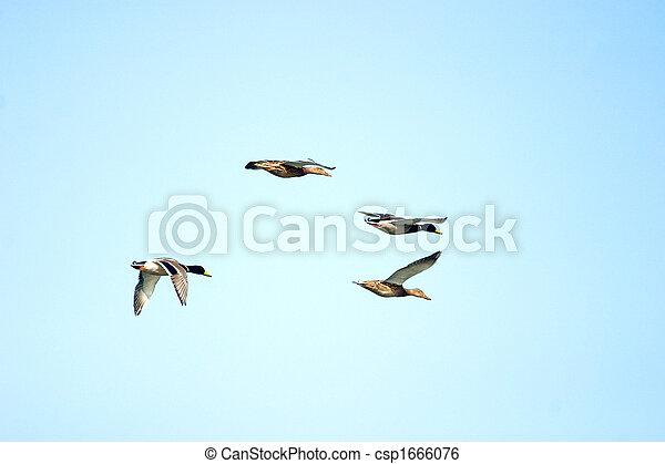 flighting wild birds - csp1666076