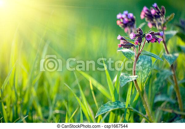 fresco, fundo, primavera - csp1667544