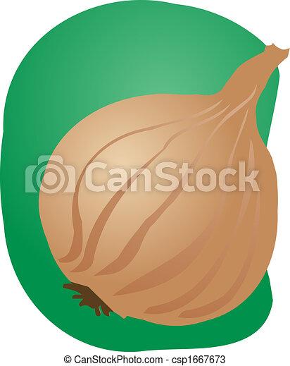Onion illustration - csp1667673