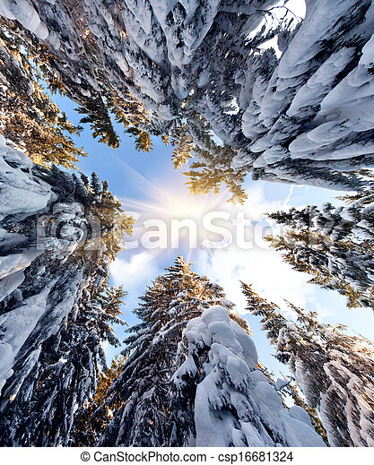 The tops of snow-covered fir-trees on the background of blue sky - csp16681324