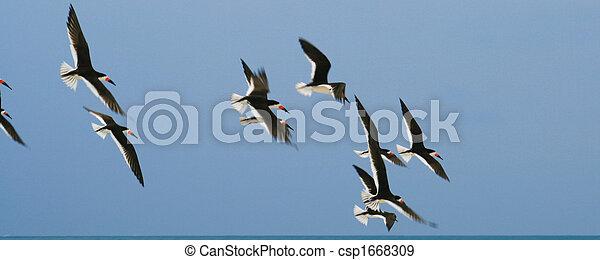 Flying away birds - csp1668309