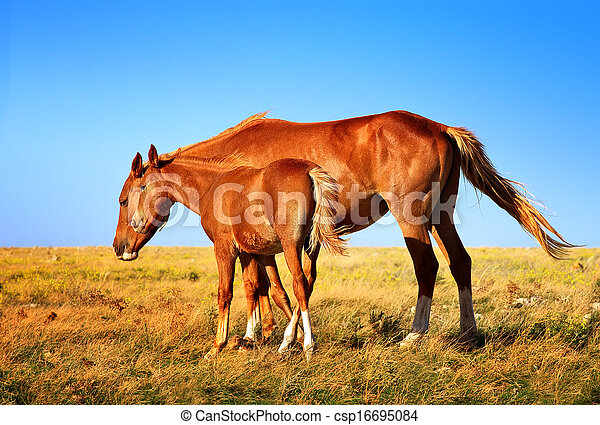 Horse Mare with Foal mother and baby Farm Animal on field with blue sky on background saving nature ecology concept - csp16695084
