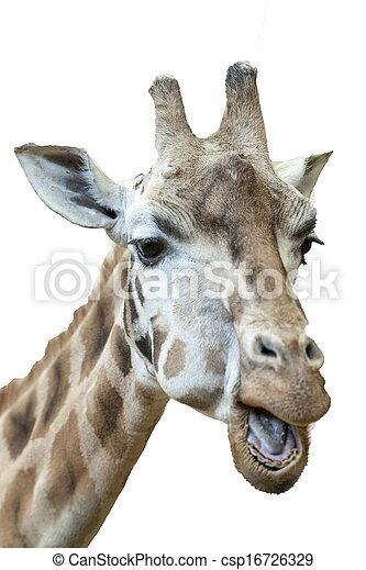 Photo de rigolote gros plan girafe fond blanc close - Girafe rigolote ...