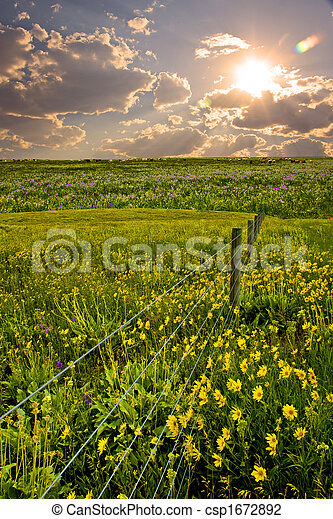 Field with fence and flowers - csp1672892