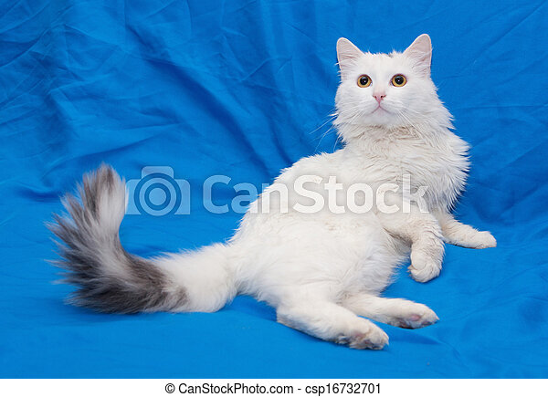 White cat with gray tail and yellow eyes - csp16732701