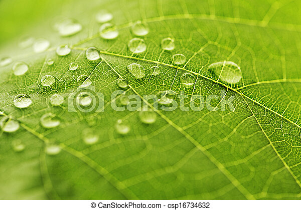 Water drop on green leaf - csp16734632