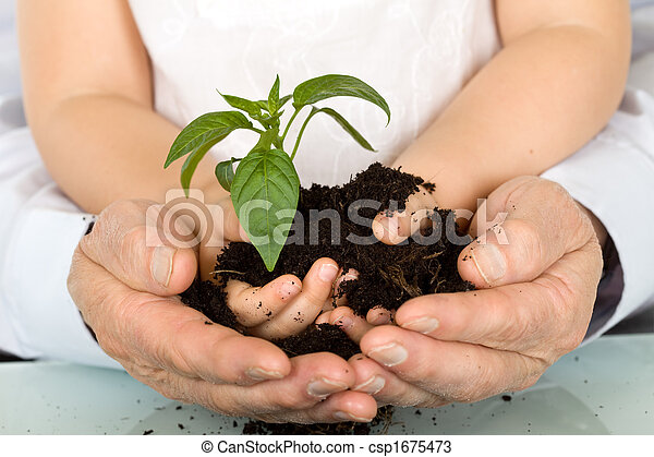 Child and adult hands holding new plant - csp1675473