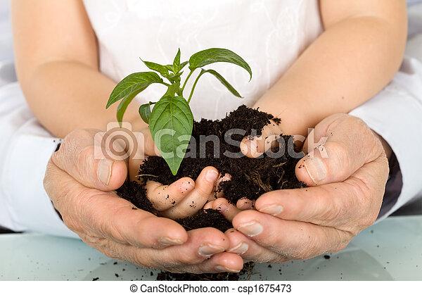 criança, e, adulto, mãos, segurando, Novo, planta - csp1675473