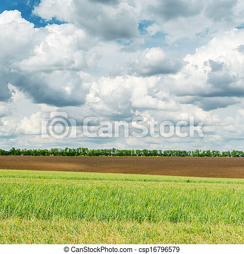 agriculture green field and low clouds over it - csp16796579