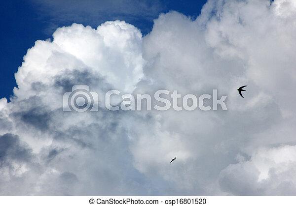sky - csp16801520
