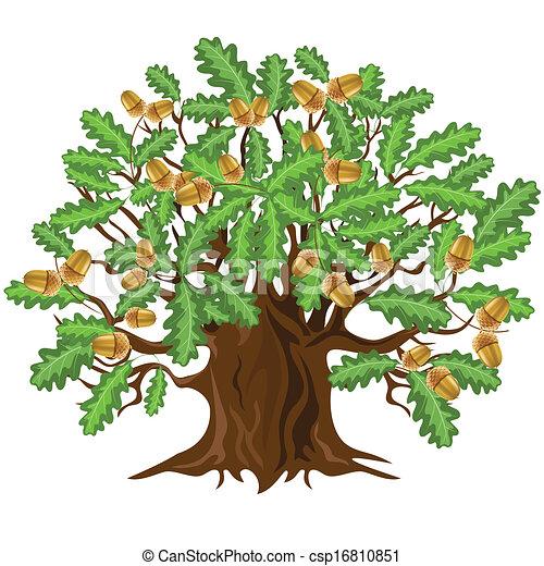 Clipart Vector of Oak tree with acorns, vector illust ...