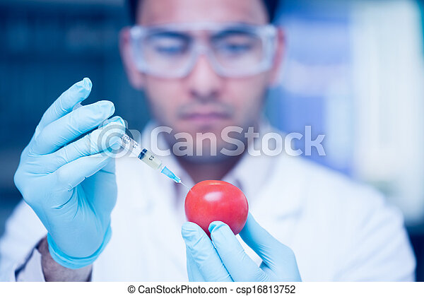 Scientific researcher injecting a tomato at the lab - csp16813752