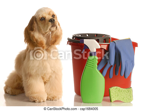 house training a puppy - csp1684005
