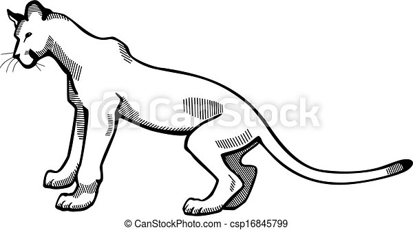 Web further Un Lion moreover  as well 88 Draw Simba besides Mountain Lion. on lion drawings