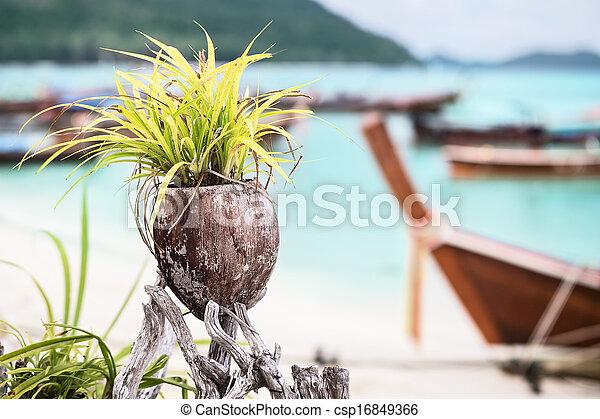 image de noix coco plage pot d 233 coration plante asiatique csp16849366 recherchez des