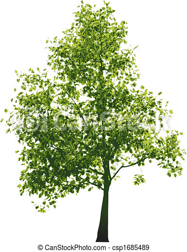 Vector green tree - csp1685489