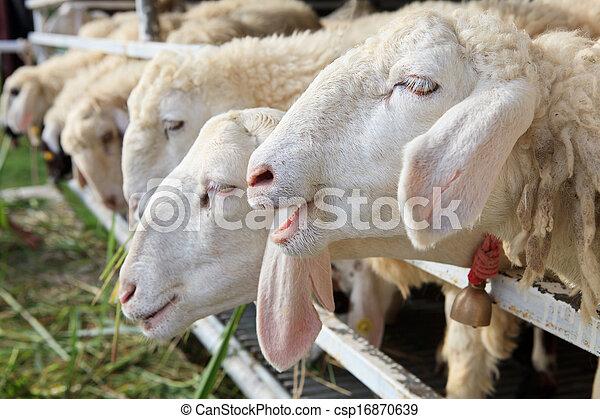 Archivi fotografici di sheep lontano ranch su faccia for Piani di ranch tentacolare