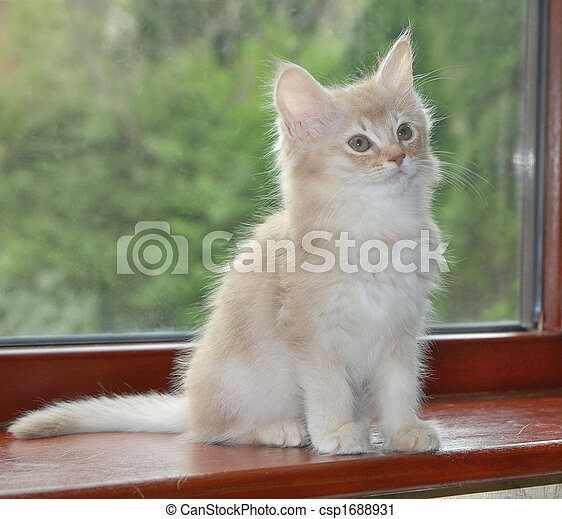 kitten on window sill - csp1688931