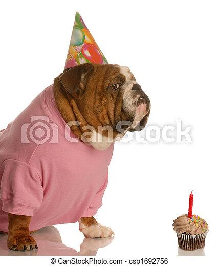 生日, 狗 - csp1692756