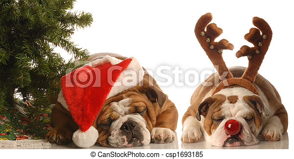 Stock Images of dogs dressed up as santa and rudolph - bulldog ...