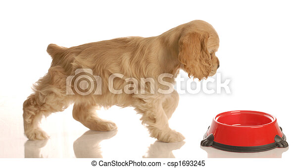 hungry puppy - csp1693245