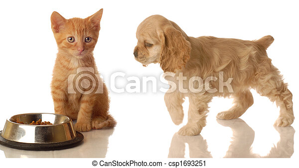 kitten and puppy eating - csp1693251