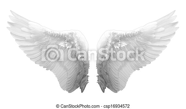 white angel wing isolated - csp16934572