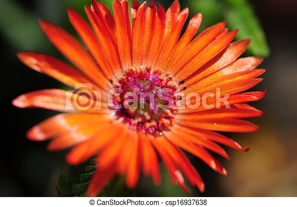 Small Red Flower in Macro Photography. Flowers Photo Collection