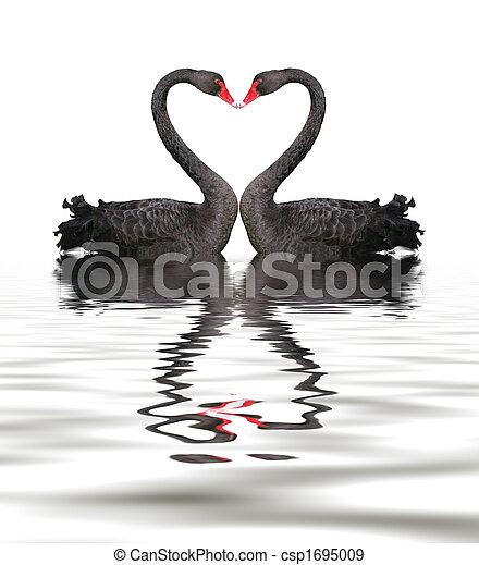 Black Swan Romance - csp1695009