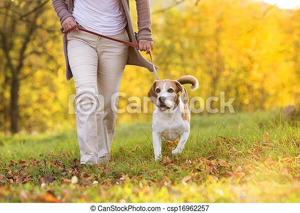 images de chien promenade personne agee femme marche elle csp16962257 recherchez des. Black Bedroom Furniture Sets. Home Design Ideas